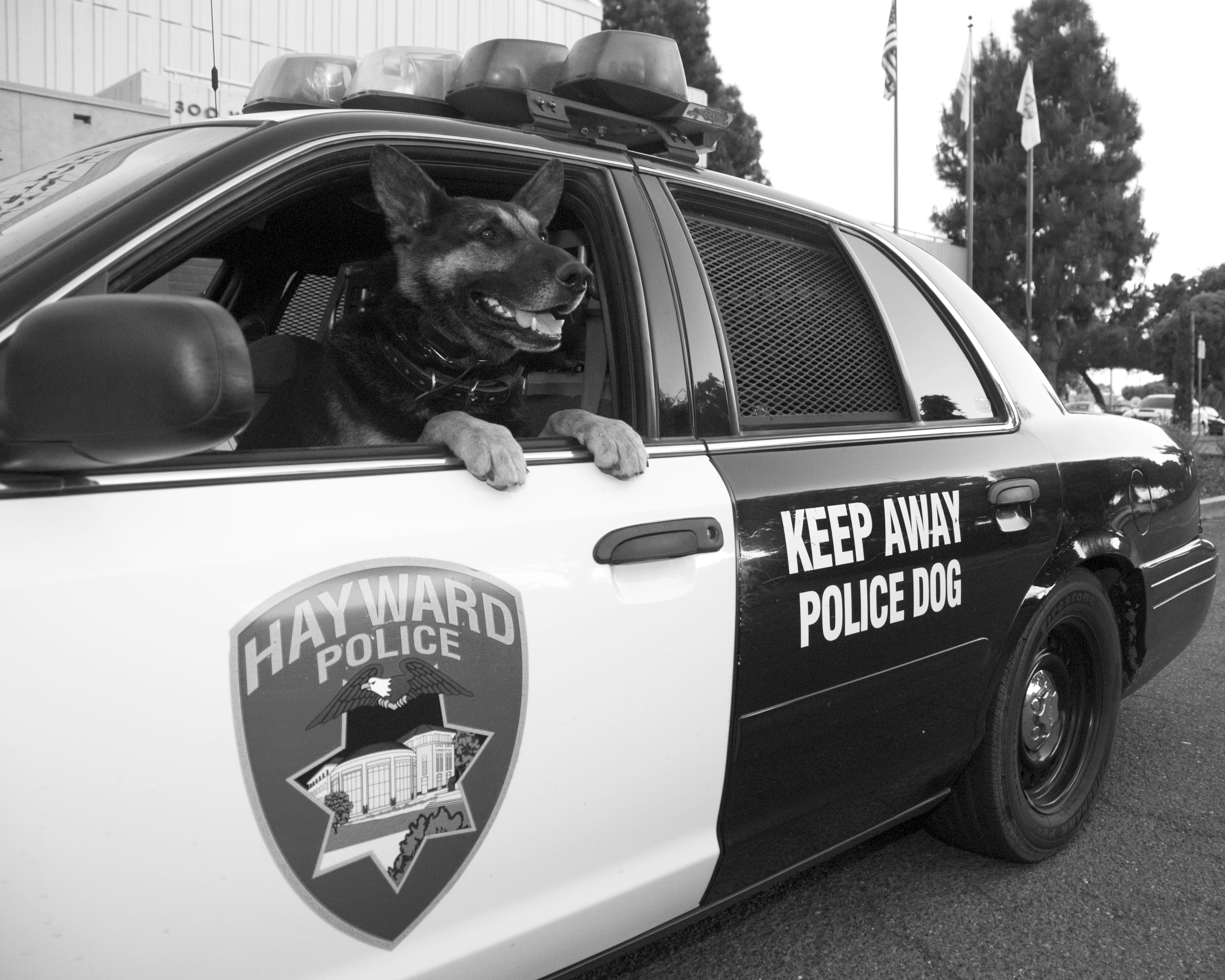 Special Operations Division | City of Hayward - Official website