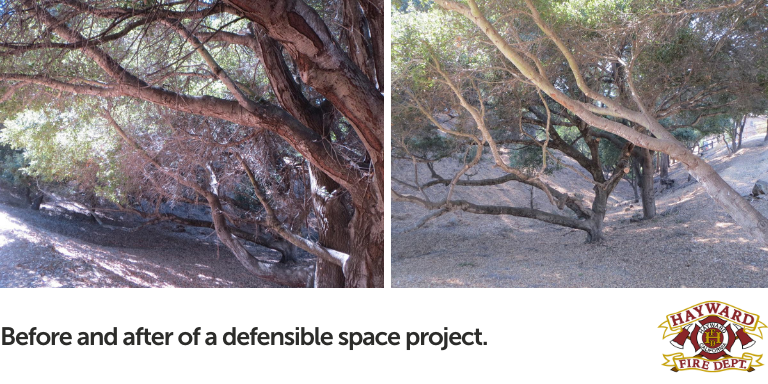 Two side-by-side photos of a shrubby area before (leafy, lots of low hanging branches) and the same shrubby area with less branches, cleaner ground, and higher branches.