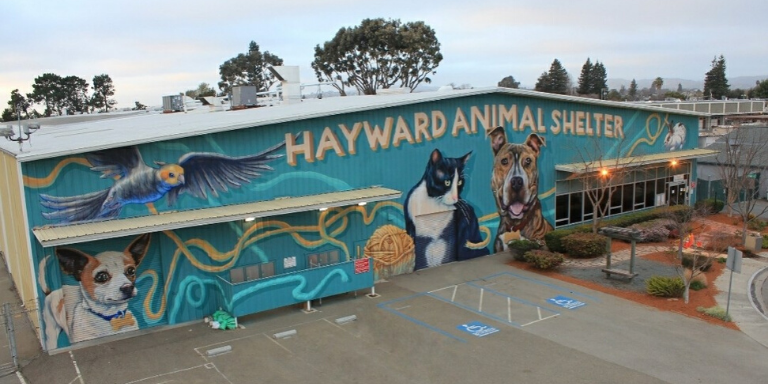 A large building covered by a mural of cats, dogs and other pets