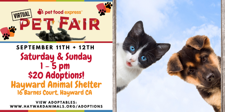 a puppy and kitten next to the pet fair information